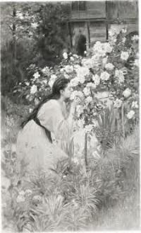 Tea Roses by Albert Aublet